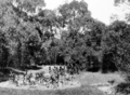 Queensland State Archives 98 Paths constructed by Sir Thomas Herbert John Chapman Goodwin in the grounds of Government House Fernberg Road Paddington Brisbane c 1930.png
