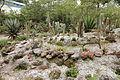 Quitos botaniska trädgård-IMG 8804.JPG