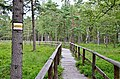 Rašeliniště u Karlówa - panoramio.jpg