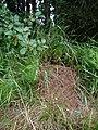 Rašelinná louka u Proseče-Obořiště 17.jpg