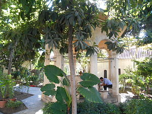 Great Mosque (Adana) - Courtyard