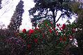 Real Jardín Botánico de Madrid (2).jpg