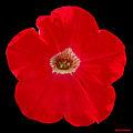 Red ! (4682477900).jpg
