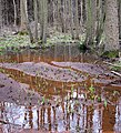 Reflections in rusty water - geograph.org.uk - 1196320.jpg