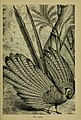 Reptiles and birds - a popular account of their various orders, with a description of the habits and economy of the most interesting (1883) (14772262903).jpg