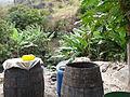 Ribeira Principal-Distillerie I (1).jpg