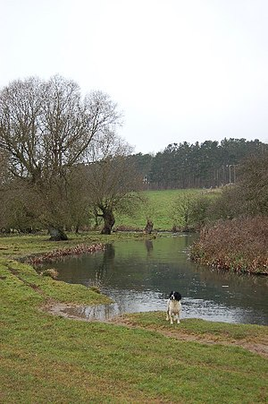 River Coln - The River Coln between Bibury and Coln St Aldwyn.