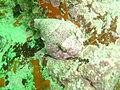 Rocksucker at Rocky Bay DSC00480.JPG