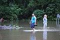 Roman Forest Flooding - 4-18-16 (26448459181).jpg