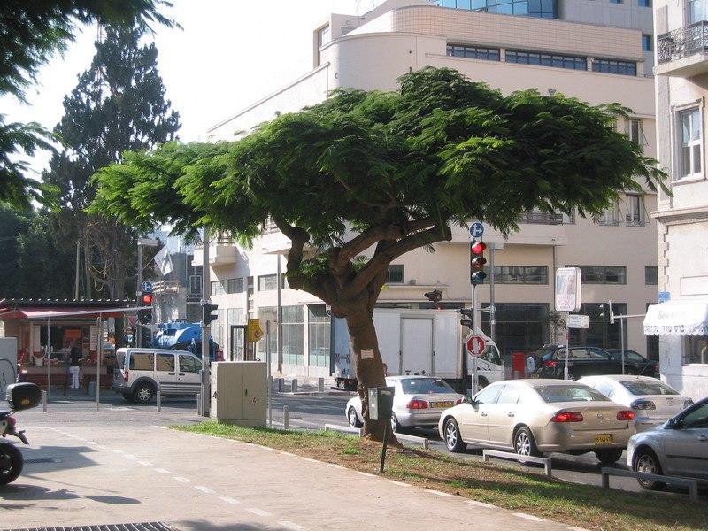 Rothschild Boulevard3