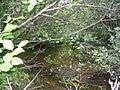 Ruisseau à Eugène.JPG