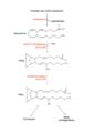 Síntesi tromboxans.png