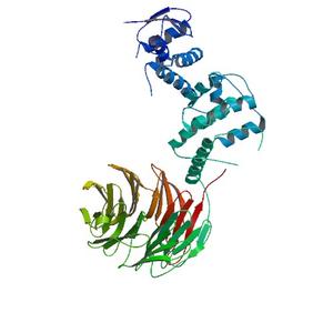 APC/C activator protein CDH1 - Image: SCF(Fbw 7)