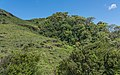 SL Sinharaja Forest asv2020-01 img16.jpg