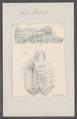 Salpa tilesii - - Print - Iconographia Zoologica - Special Collections University of Amsterdam - UBAINV0274 092 08 0020.tif