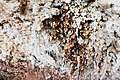 Salt deposits. Grand Canyon National Park, Arizona (25778651294).jpg