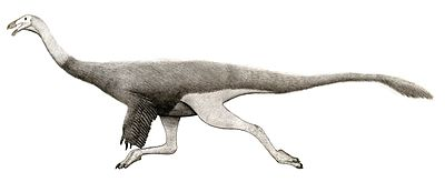 Saltillomimus rapidus.jpg