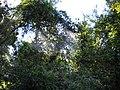 Salto Apucaraninha - panoramio - Alex BATISTA COELHO (2).jpg