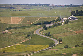 Sancerre vineyards.jpg