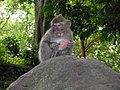 Sanctuaire des macaques (Ubud) - panoramio.jpg