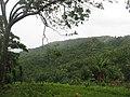 Sandy Bay, Colonia Policarpo - panoramio.jpg