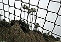 Santa Monica Overpass and Palms (3664513967).jpg