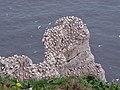 Scale Nab, Bempton Cliffs - geograph.org.uk - 768898.jpg