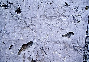 Rock Drawings in Valcamonica -  Deer-hunting scene