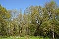 Schleswig-Holstein, Fockbek, Naturschutzgebiet Fockbeker Moor NIK 1631.jpg