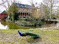Schloss Rheydt (V-24).jpg