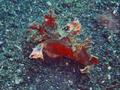 Scorpionfish (16 cm) 2.png