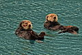 Sea Otters.jpg