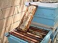 Sealed Honey in frame.JPG