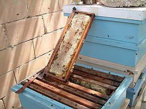 Honey - Sealed frame of honey