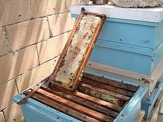 Honey - Sealed frame of honey