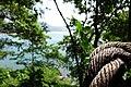 Secret Cliff - panoramio (7).jpg