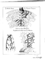 Selections of Byzantine Ornament (Page 12).png