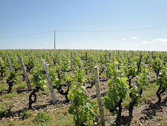Château Sigalas-Rabaud - Vineyards of Sigalas-Rabaud