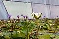 Singapore (SG), ArtScience Museum, Water Lilies -- 2019 -- 4553.jpg