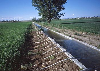 Furrow irrigation system using siphon tubes