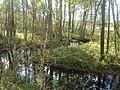 Skrundas lauku teritorija, Latvia - panoramio.jpg