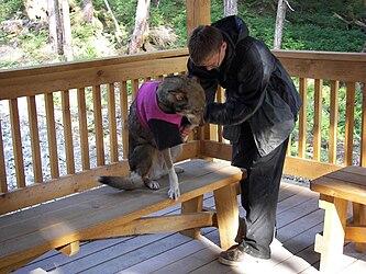 Sled Dog Discovery & Musher's Camp 31.jpg