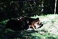 Sleeping bear (1486660155).jpg