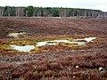 Small Lochan Beside Speyside Way - geograph.org.uk - 764401.jpg