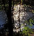 Sonnenspiegelung am St. Martiner Weiher - panoramio.jpg