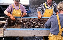 Photo of crabs in large, open metal box surrounded by fishermen