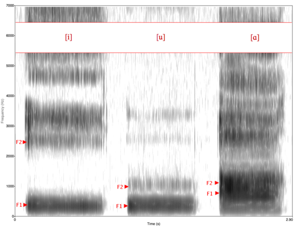 Spectrogram of vowels [i, u, a]. [a] is a low vowel, so its F1 value is higher than that of [i] and [u], which are high vowels. [i] is a front vowel, so its F2 is substantially higher than that of [u] and [a], which are back vowels. Spectrogram -iua-.png