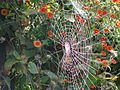 Spider web in the fall.jpg