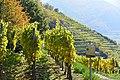 Spitz Vineyards.jpg