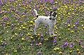 Spring Fiszka.jpg